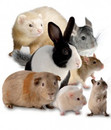 Small_Animal_group.jpg